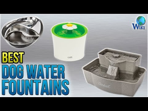 download 10 Best Dog Water Fountains 2018