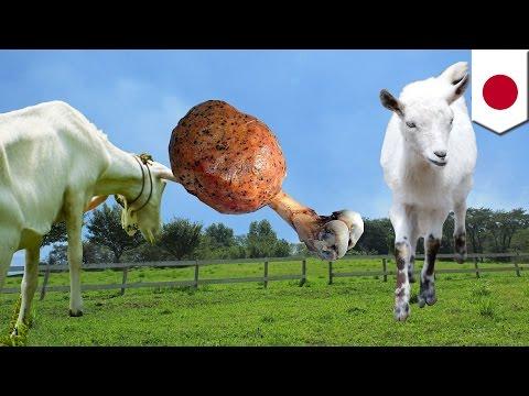 市民が愛した除草ヤギ、ベトナム人盗んで食べる