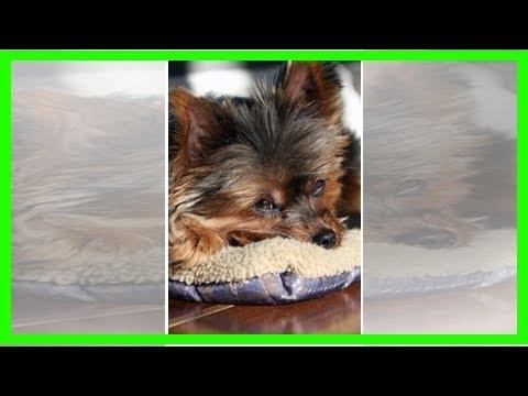 Canine acid reflux: symptoms, diagnosis and treatment