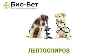 Лептоспироз. Ветеринарная клиника Био-Вет.