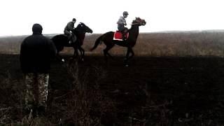 Скачки в Ингушетии