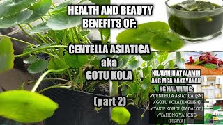 Gotu Kola Plant Benefits || Centella Asiatica Benefits || Beauty & Health Benefits || Homefoodgarden