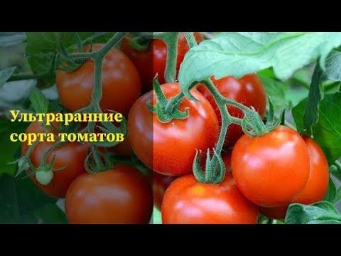Ультраранние скороспелые сорта томатов|Это вкусно..