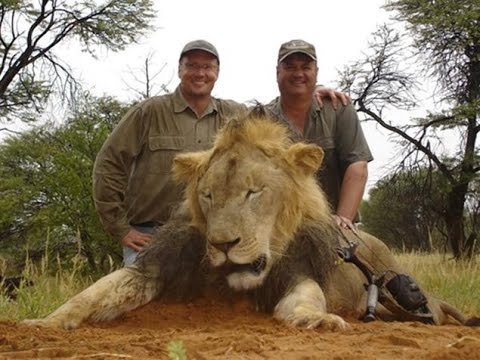 Walter Palmer Named in Illegal Killing of Cecil the Lion