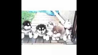 [cutest] Puppy And Baby Compilation