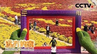 《远方的家》 20191106 长江行(64) 江水两岸花果香| CCTV中文国际
