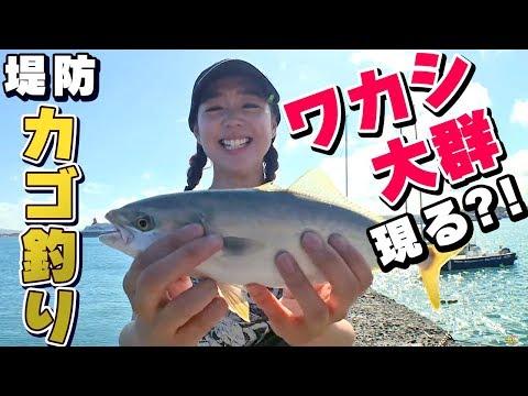 GO!GO!九ちゃんフィッシング #333 「堤防カゴ釣り!LTワカシ!(前篇) Yellowtail Fishing ! Act.1」