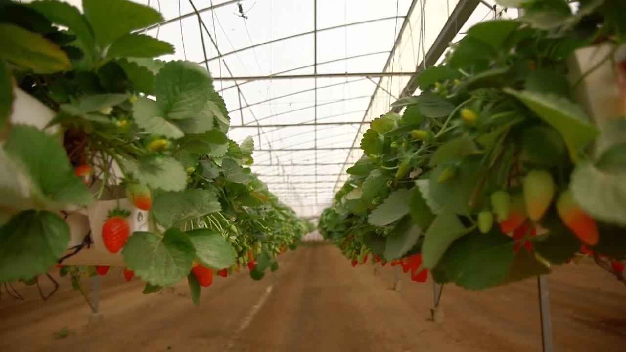 Kinh tế và dự báo: Xu hướng phát triển nông nghiệp hữu cơ ở Việt Nam, nhìn từ cách làm của Israel