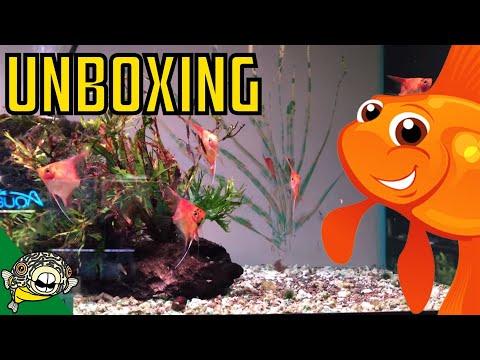 Zebra Pleco and Guppy Fish Unboxing! Zebra Plecos, Green Phantom Pleco, L333 Plecos!