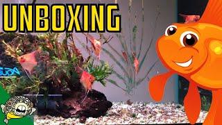 Fancy Guppy and Pleco Fish Unboxing! Zebra Plecos, Green Phantom Pleco, L333 Plecos!