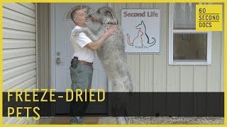 Freeze-Dried Pets   Second Life Freeze Dry // 60 Second Docs