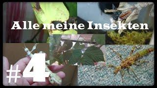 Alle meine Insekten #4 | Insekten TV