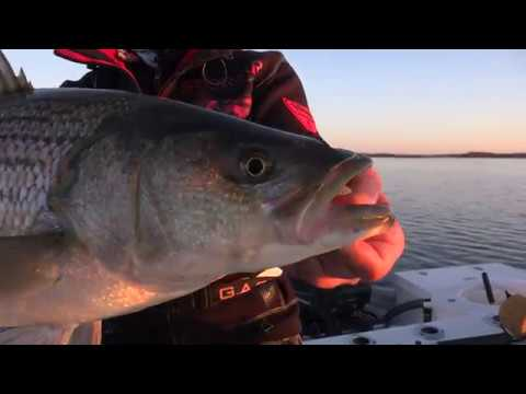 Topwater Smash! CT River Striped Bass @Sunrise