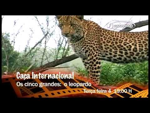 Caça Internacional. Os cinco grandes: o leopardo Travel Video
