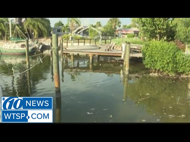 clean-up-continues-on-pinellas-county-beaches-as-red-tide-moves-up-the-coast