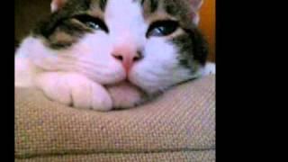 15歳で逝った愛猫。まあすけを愛してくれた友達や家族のために作りまし...