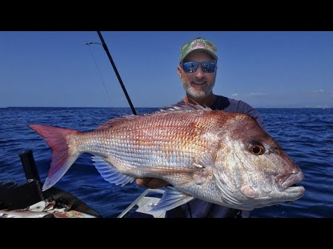Offshore Snapper Fishing ALL You Need To Know