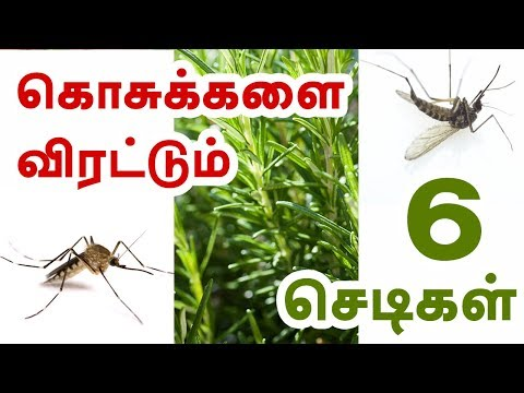 Plants That Repel Mosquitoes - Tamil Health Tips