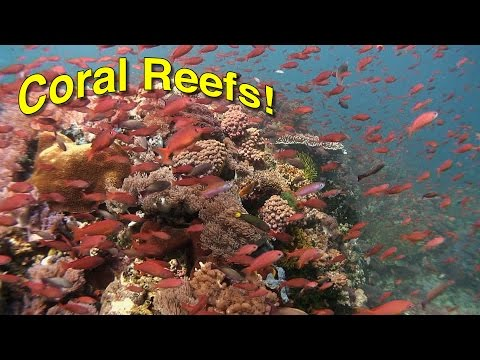 Coral Reef Biology | JONATHAN BIRD'S BLUE WORLD