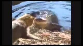 Смешное видео про кошек 2   Супер приколы 2013