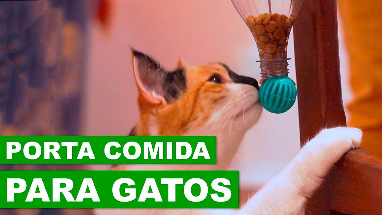 PORTA RAÇÃO PARA O SEU GATO - DIY