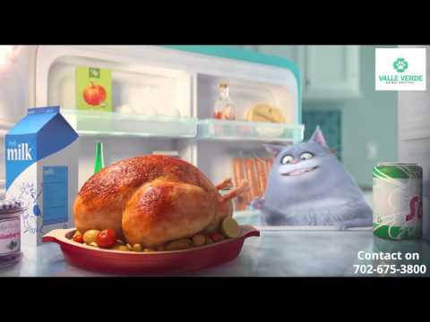 Pet Video - Valle Verde Animal Hospital - OBESE PETS NEED OUR DISH!