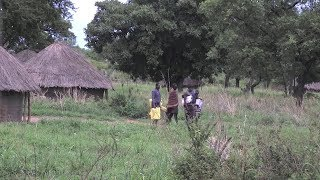 Advances in forest tenure reform in Uganda