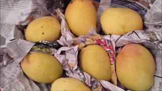 How To Ripen Manġoes Faster At Home (2 Quick Methods)