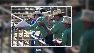 Roma Cattle Sale Yard Queensland Australia