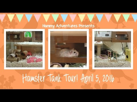 ☆-hamster-cage-tour!-april-5,-2016-☆
