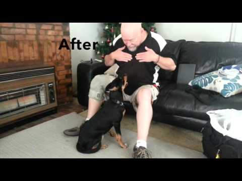 Jumping Up Before/After Training - In Home Dog Training Australia - Wesley Laird
