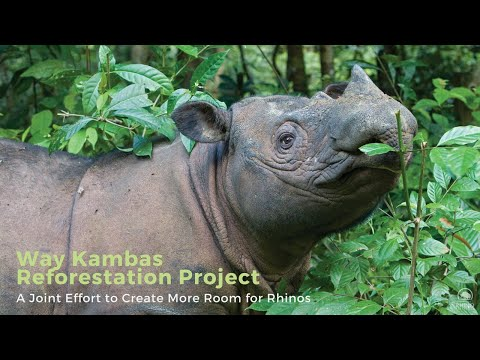 Reforestation for Rhinos - A Joint Effort to Create More Room for Sumatran Rhinos