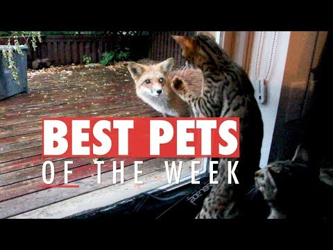 Best Pets of the Week | October 2017 Week 3