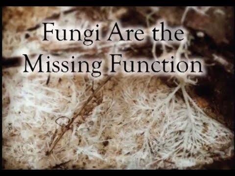 Fungi Are the Missing Permaculture Function