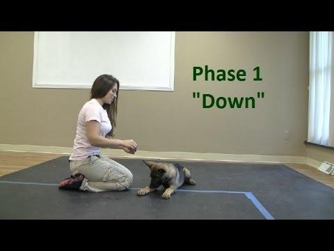 How to Train a dog to Lie Down (K9-1.com)