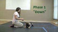 """How to Train a dog to Lie """"Down"""" (K9-1.com)"""