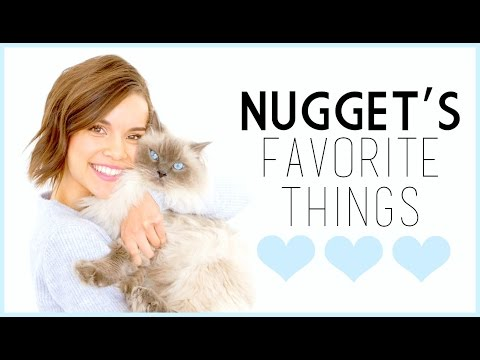 Nugget's Favorite Things! // Cat Supplies, Toys, + More!