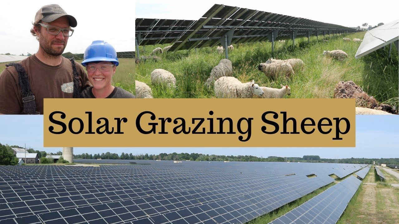 How They Expanded Their Sheep Farm WITHOUT Buying More Land (SOLAR GRAZING): Vlog 151