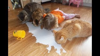 Я РЖАЛ ПОЛЧАСА. Смешные Коты и Собаки. ЛУЧШИЕ ПРИКОЛЫ С ЖИВОТНЫМИ.