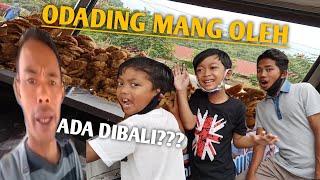 Download BERBURU ODADING MANG OLEH, MIKAEL DAN BOCIL MUKBANG! AUTO VIRAL! | Mikael TubeHD