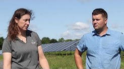 Solar grazing: How sheep mow the lawn at community solar farms in Upstate NY