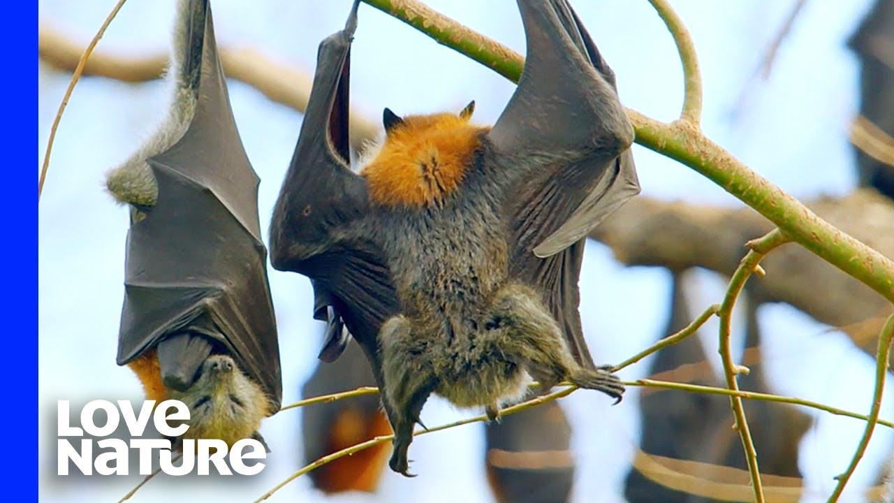 Do Bats Poop Upside Down?