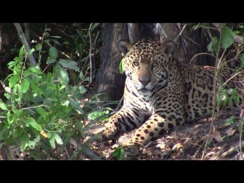 El Pantanal: un paraíso salvaje brasileño