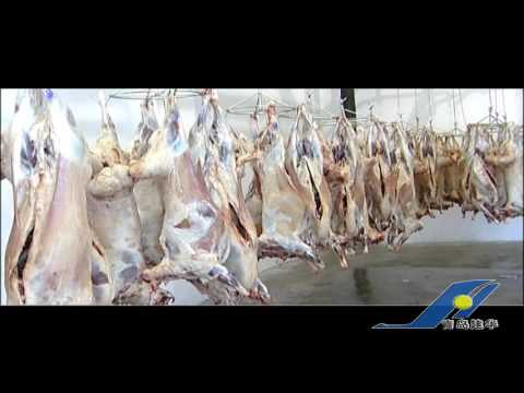 the process of slaughtering cattles