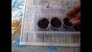 Diy Seedling Tray With Green House Effect