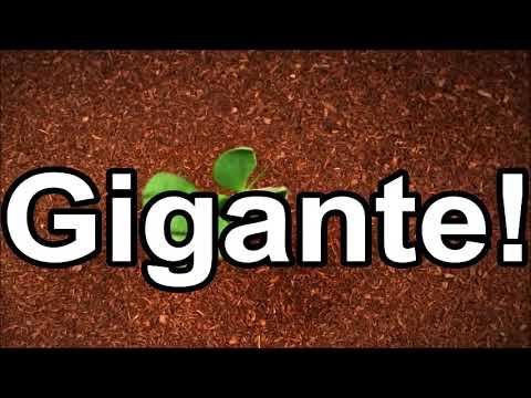 Primavera - Voz da Verdade (Cantado e Legendado)