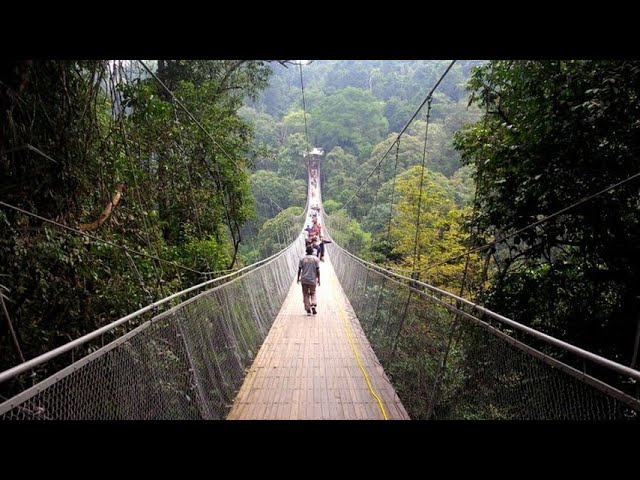 Jembatan Gantung Melintasi Hutan Gunung Gede Pangrango