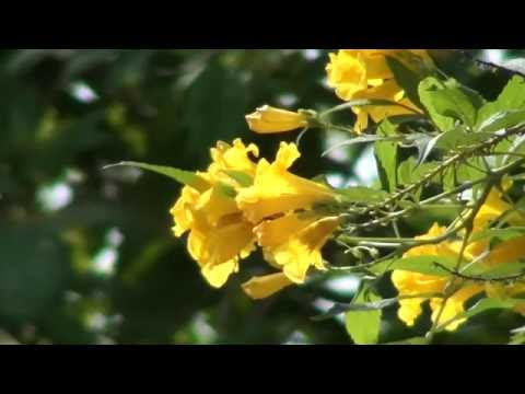 New Sony handycam HD video Wedding flowers background,and composing background  11 thumbnail