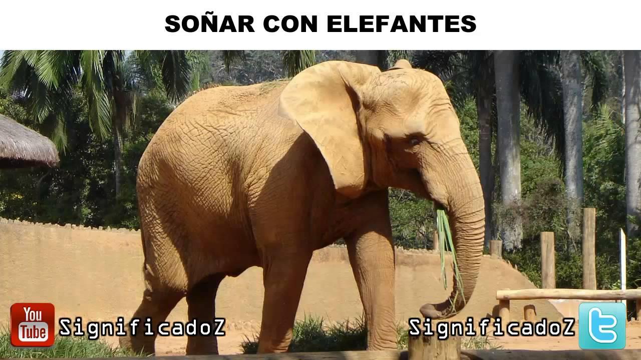 Significado De Soñar Con Elefantes Que Significa Youtube