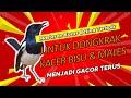 Masteran Kacer Betina Terbaik Untuk Dongkrak Kacer Bisu Dan Males Menjadi Gacor Terus Kicau Q  Mp3 - Mp4 Download